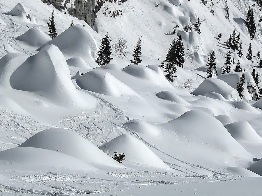 Winter by Damir Ipavec - Landscapes Mountains & Hills ( pwcwinter, winter, tree, snow, white )