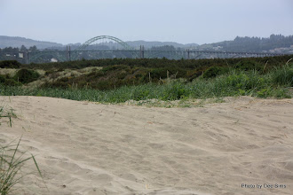 Photo: (Year 2) Day 351 - Bridge in to Newport, viewed from South Beach NP