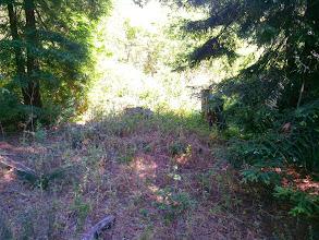 Photo: Stumps between the redwoods