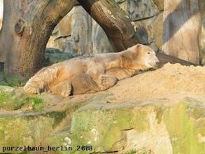Photo: Knut mit Jutesack im Sonnenschein :-)