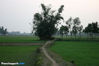Photo: Village in Panchagarh