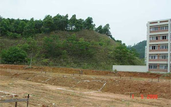 Photo: CHN-UR09- The stadium/college site five years later. Fully stable with native plants established
