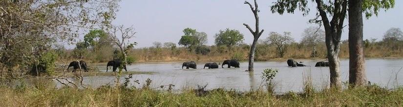 Photo: Park Narodowy Kaboré-Tambi - baraszkujace w wodzie słonie