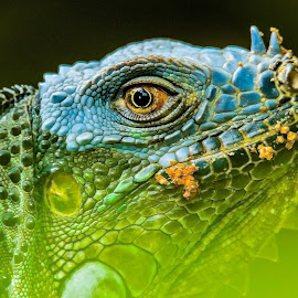 The Mask by Ken Nicol - Animals Reptiles (  )