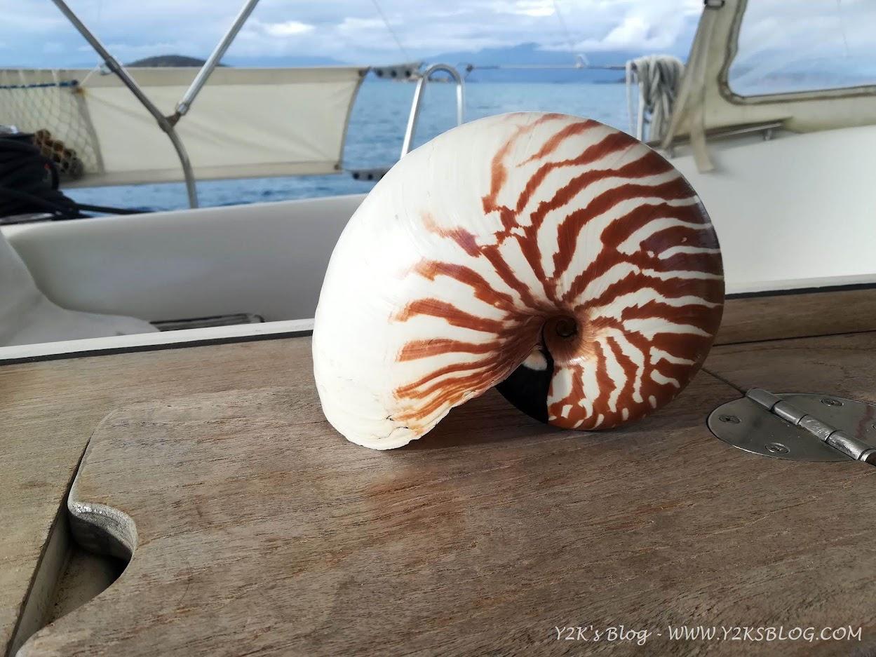Il nautilo è il simbolo della Nuova Caledonia