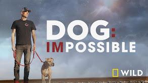 Dog: Impossible thumbnail