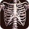 Osseous System in 3D (Anatomy) file APK for Gaming PC/PS3/PS4 Smart TV
