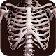 Osseous System in 3D (Anatomy) (app)