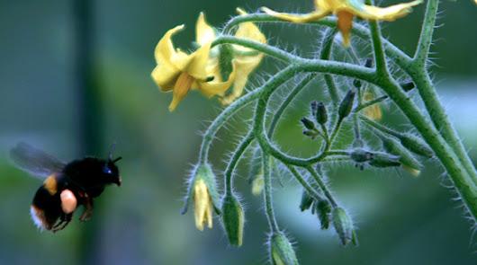 Treinta mil millones de insectos beneficiosos cuidan de las frutas y verduras
