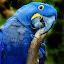 Mangeur de bois by Gérard CHATENET - Animals Birds (  )