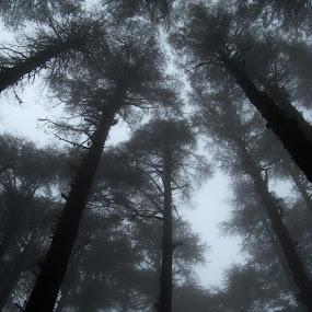 a place to watch out for heaven by Arup Chowdhury - Nature Up Close Trees & Bushes