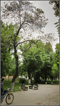 Photo: Glădița, plătica (Gleditschia triacanthos) - din Parcul Tineretului - 2017.05.10