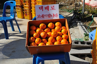 Photo: Apparently, Jeju orange is famous for its sweetness. Had our apartment's friendly host not given us ten Jeju oranges a day, we would have bought some along the way to the waterfall.
