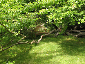 Photo: Day 6: The Kangaroo House B&B garden has many hidden benches, which are great for private conversations.