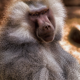 0844-AO-0307-02-18 by Fred Herring - Animals Other