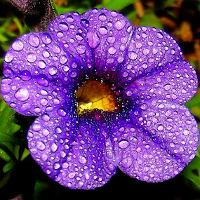 by John Geddes - Flowers Single Flower (  )