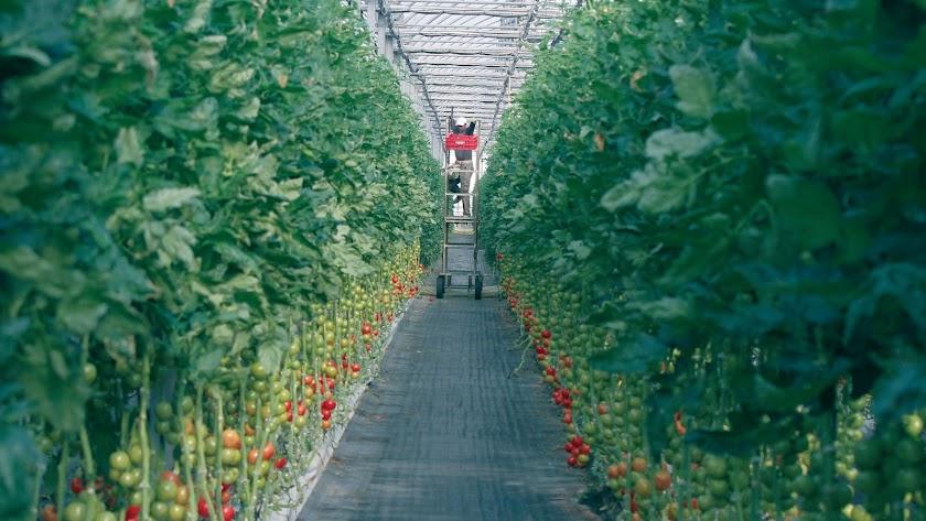 El proyecto Fertinnowa busca optimizar el uso de agua y fertilizantes en la agricultura.