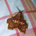 Walker's Moth