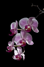 Fotó: Orchidea