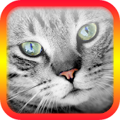 Translator for Cats - Cat Translator