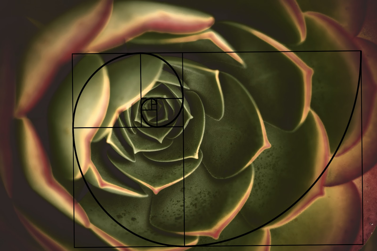 Fibonacci spiral as a tool for composition.