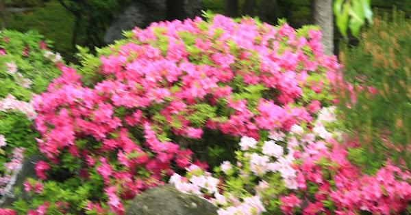 96. Jounanguu (100 Japanese Garden in Kyoto I recommend)