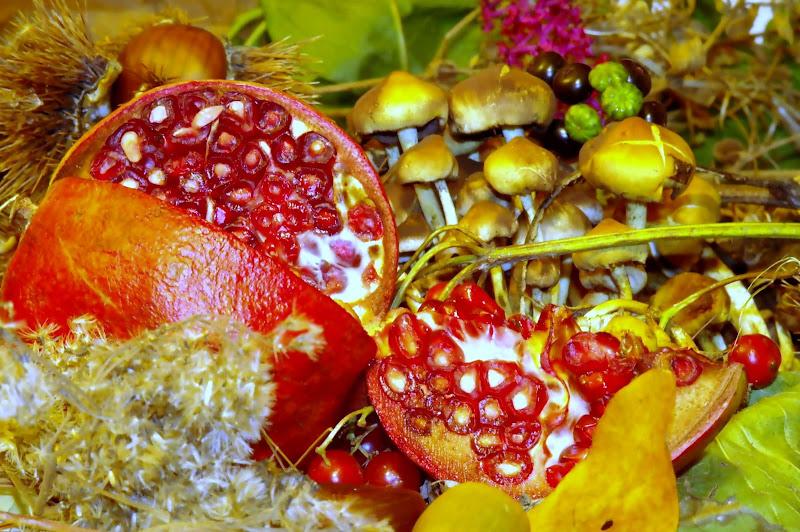 Fiori e frutti di acquario