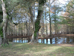 Photo: A Preserve right next to the Resort with white wading birds in the background