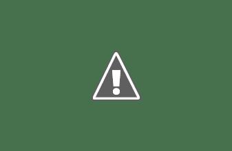 Photo: hromadná canis terapie