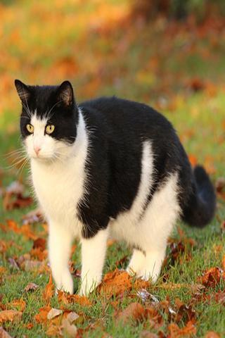 猫のボディランゲージチュートリアル
