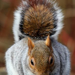 Squirrel pix 2.jpg