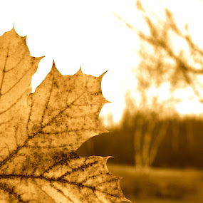 by Joelle McGraw - Nature Up Close Leaves & Grasses ( old, nature, autumn, fall, leaves )