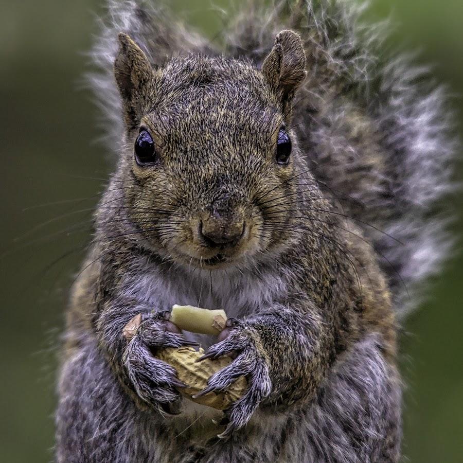 Squirrel snack by Carol Plummer - Animals Other Mammals (  )