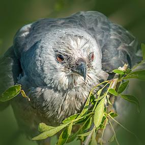 by William Underwood  - Animals Birds