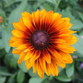Single Flower by Frank Gualtieri - Flowers Single Flower (  )