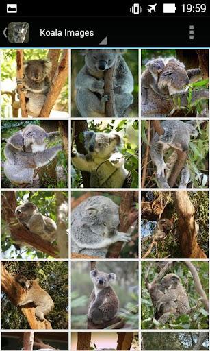 KoalaBG: Koala Wallpapers