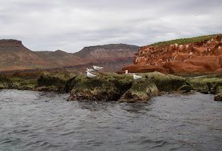 Photo: Elegant Terns
