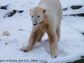 Photo: Knut mit Schneenase ;-)
