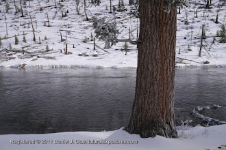 Photo: The Madison River runs serenely through a winter landscape in Yellowstone National Park, Wyoming.