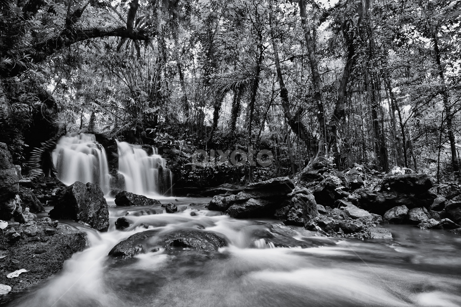 Small Waterfall by Made Suwita - Landscapes Forests ( black and white, waterfall, forest, pwcbwlandscapes, river )