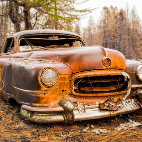 Sitting pretty by Michael Mercer - Transportation Automobiles ( junkyard car, classic car, rusty )