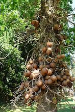 Photo: weird tree