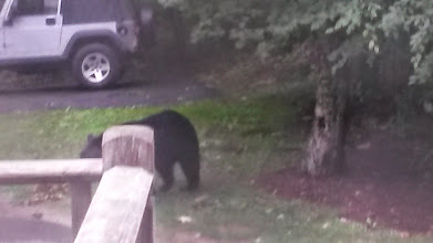 Photo: Another bear wandering around..  ironically, they only appeared when Jim was there and I was out somewhere.  I never got to see them myself!