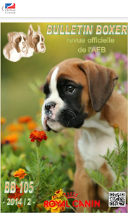 centrale canine boxer