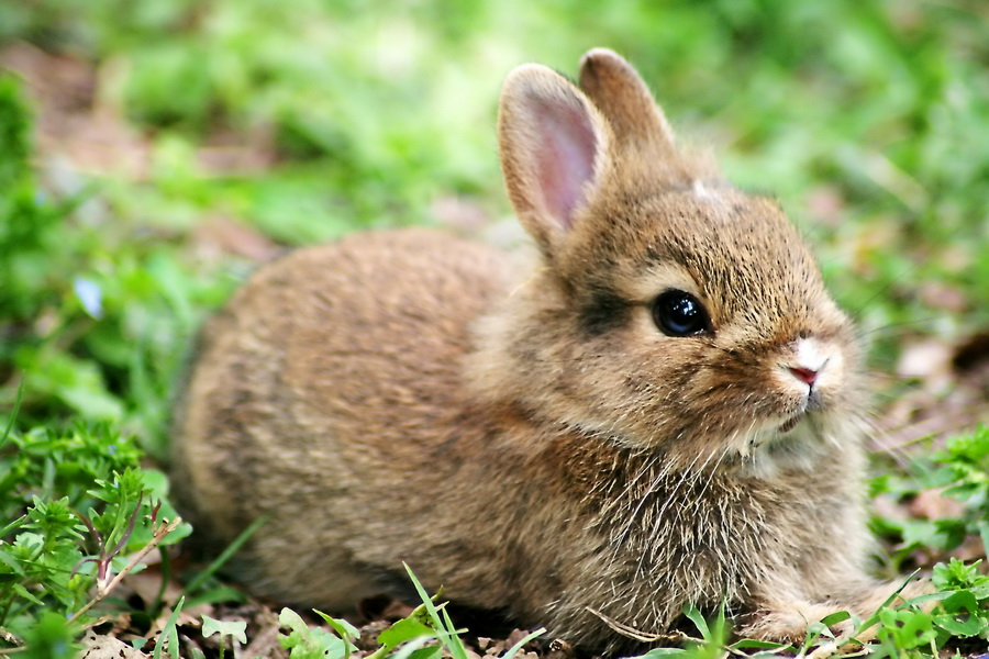Small rabbit  by Opie Abati  - Animals Other Mammals