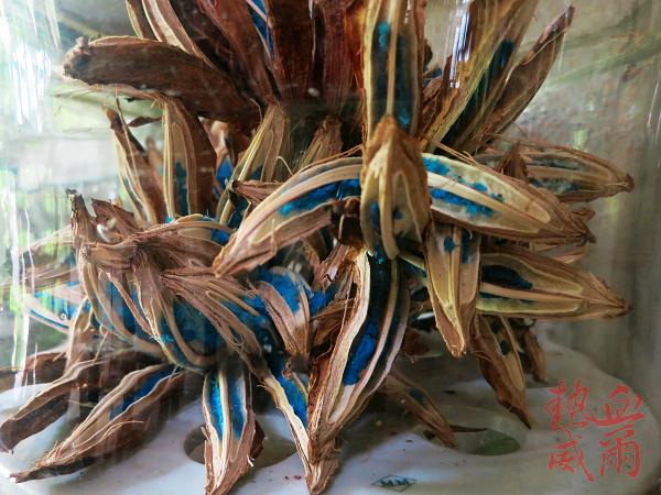 台南員工旅遊:千畦種子博物館