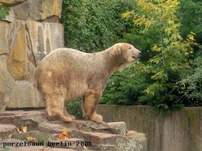Photo: Knut schaut nach den Nachbarn ;-)