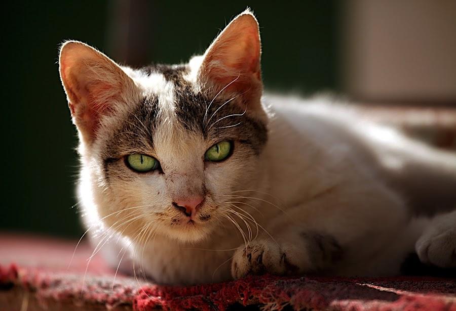 Stray Cats by Leyon Albeza - Animals - Cats Portraits
