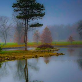 Pionee Park Bonsai  by Bruce Thiel - City,  Street & Park  City Parks (  )