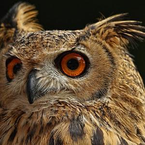 Owl07081501.jpg